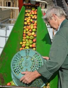 Die neue Apfelernte auf dem Weg Richtung Saftpresse.
